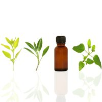 Green Herbaceous Fragrance Oils